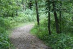 Image of path in forest of Cannon River Wilderness Area