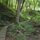 Image of a wood paved trail in the woods going up a hill