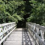 Image of wooden bridge leading to forest