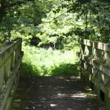 Image of the end of the bridge leading to a forested meadow