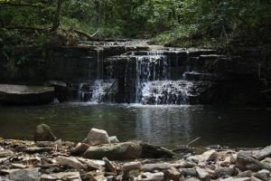 Image of water rushing through rocky waterfall into pond below with surrounding forest and rocky shore