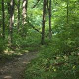 Image of a shady trail in the forest