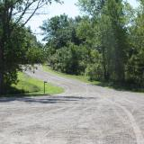 Image of the Forest Lined Drive