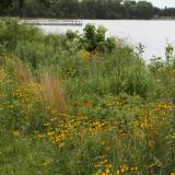 Image of red and yellow wildflowers mixed with foliage on shoreline of lake
