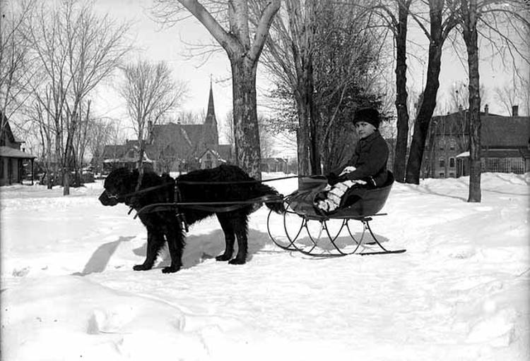 Black and white image of a child sitting in a sleigh drawn by a black dog in the snow