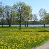 Image of a meadow in McCullough park with yellow flowers and lake visible in background