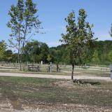Image of available sidewalks and benches in the McCullough Park land area with sparse trees