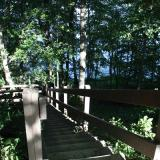 Image of the wooden stairway in the forest  leading to the Union Lake